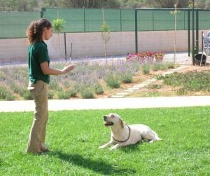 Curso de iniciación a la educación canina
