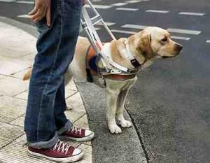 Perro-guía-trabajando