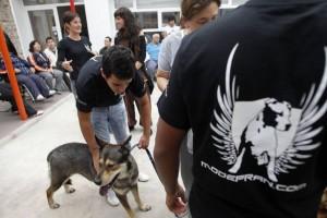 Cadena de favores canina «Proyecto Nous Amics»